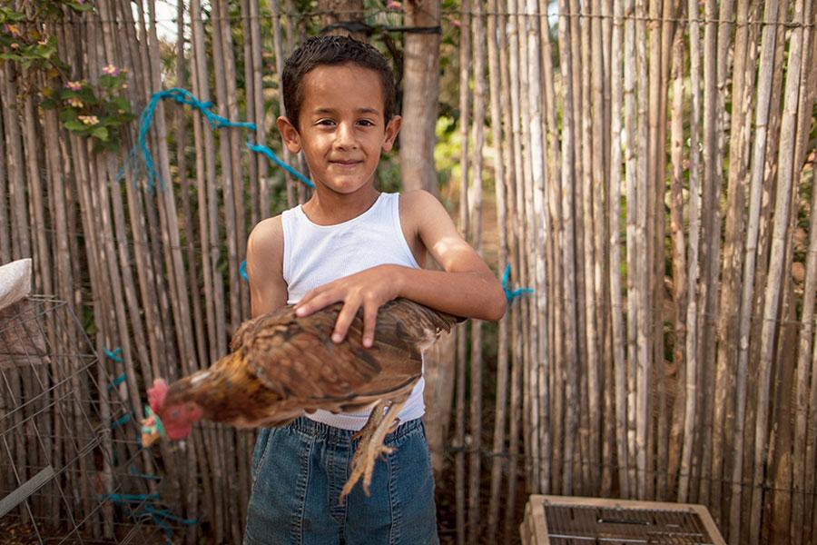 boy holds chicken